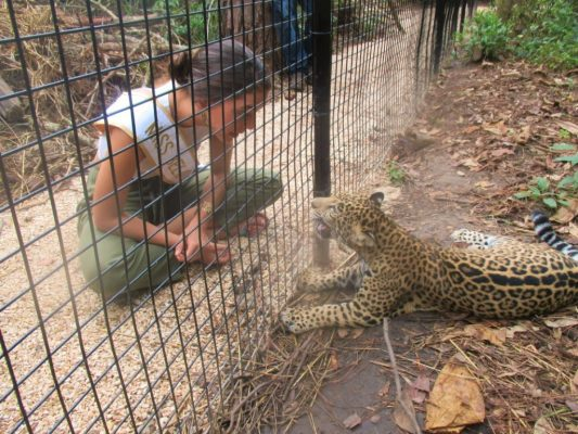 belize-zoo-miss-bze-universe-and-chiqui