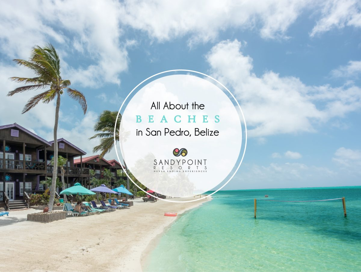 All-About-the-Beaches-in-San-Pedro