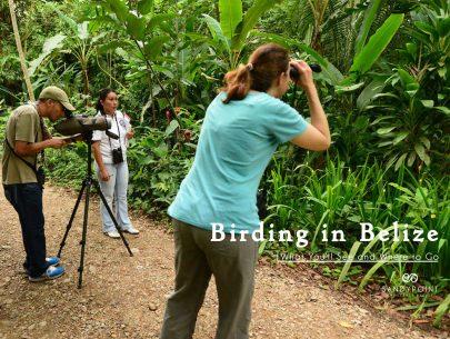 Birding-in-Belize