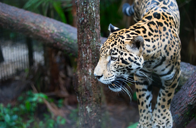 Mainland Tours Belize Zoo