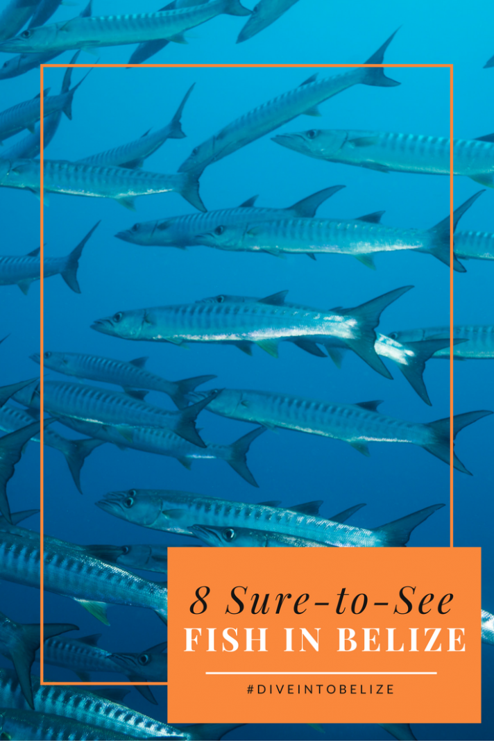8 Sure-to-See Fish on your Belize Dive
