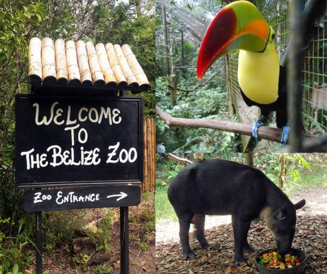 WELCOME to the Belize Zoo