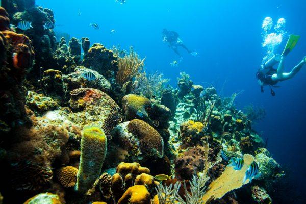 Belize Blue Hole diving requirements