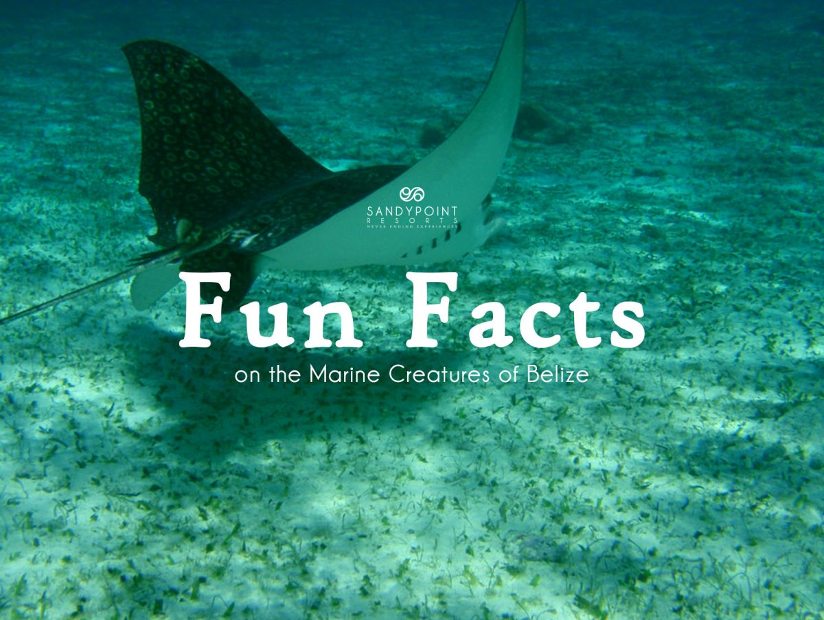 Fun Facts on the Marine Creatures of Belize