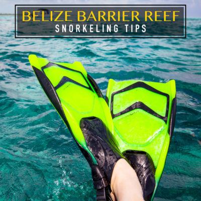 Belize Barrier Reef Snorkeling Tips